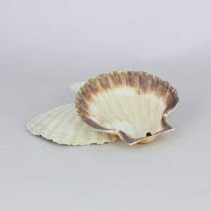 COQUILLES ST JACQUE NATURE/MINERAL